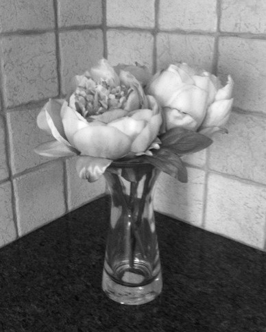 flowers on counter top